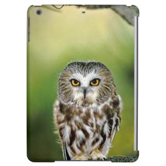 USA Colorado Close-up of northern saw-whet owl iPad Air Cover