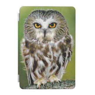 USA, Colorado. Close-up of northern saw-whet owl iPad Mini Cover
