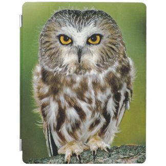 USA, Colorado. Close-up of northern saw-whet owl iPad Smart Cover