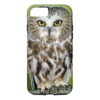USA, Colorado. Close-up of northern saw-whet owl iPhone 7 Case
