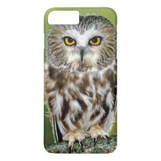 USA, Colorado. Close-up of northern saw-whet owl iPhone 8 Plus/7 Plus Case