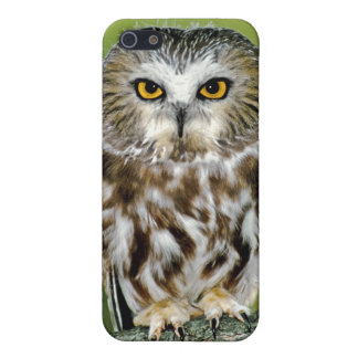 USA Colorado Close-up of northern saw-whet owl iPhone 5 Covers