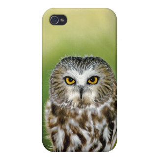 USA Colorado Close-up of northern saw-whet owl Cover For iPhone 4