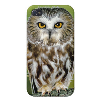 USA Colorado Close-up of northern saw-whet owl Cases For iPhone 4
