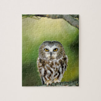 USA, Colorado. Close-up of northern saw-whet owl Jigsaw Puzzle