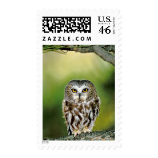 USA Colorado Close-up of northern saw-whet owl Postage Stamps