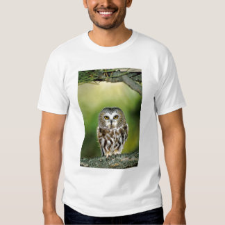 USA, Colorado. Close-up of northern saw-whet owl Shirt