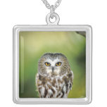 USA, Colorado. Close-up of northern saw-whet owl Silver Plated Necklace