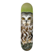USA, Colorado. Close-up of northern saw-whet owl Skateboard Deck