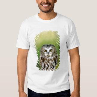 USA, Colorado. Close-up of northern saw-whet owl T Shirt