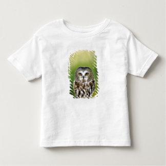 USA, Colorado. Close-up of northern saw-whet owl Toddler T-shirt