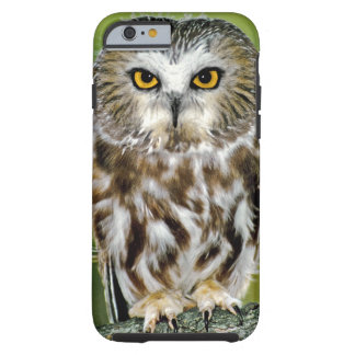 USA, Colorado. Close-up of northern saw-whet owl Tough iPhone 6 Case