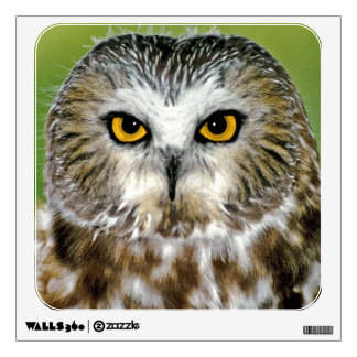 USA, Colorado. Close-up of northern saw-whet owl Wall Stickers