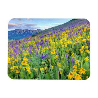 USA, Colorado, Crested Butte. Landscape Magnet