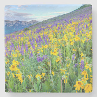 USA, Colorado, Crested Butte. Landscape Stone Coaster