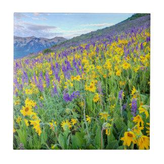 USA, Colorado, Crested Butte. Landscape Tile