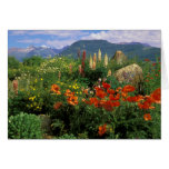 USA, Colorado, Crested Butte. Poppies and lupine Card