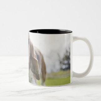 USA, Colorado, curious dog walking towards Two-Tone Coffee Mug