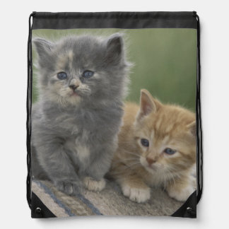 USA, Colorado, Divide. Two barn kittens pose on Drawstring Backpack