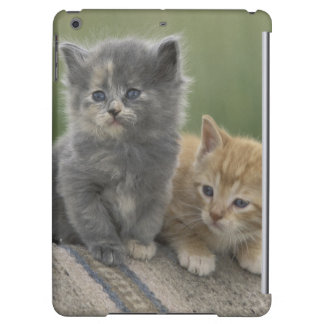 USA, Colorado, Divide. Two barn kittens pose on iPad Air Cases