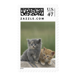 USA, Colorado, Divide. Two barn kittens pose on Postage Stamp