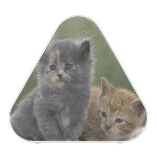 USA, Colorado, Divide. Two barn kittens pose on Speaker