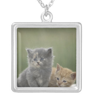 USA, Colorado, Divide. Two barn kittens pose on Square Pendant Necklace