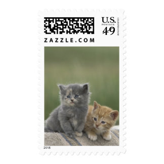 USA, Colorado, Divide. Two barn kittens pose on Stamp