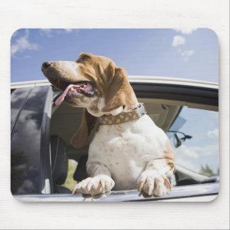 USA, Colorado, dog looking through car window 2 Mouse Pad