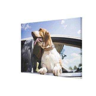 USA, Colorado, dog looking through car window Canvas Print