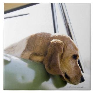 USA, Colorado, dog looking through car window Large Square Tile