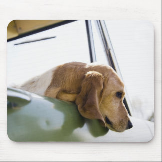 USA, Colorado, dog looking through car window Mouse Pad