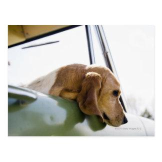 USA, Colorado, dog looking through car window Postcard