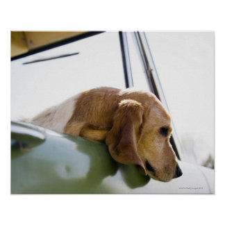 USA, Colorado, dog looking through car window Print