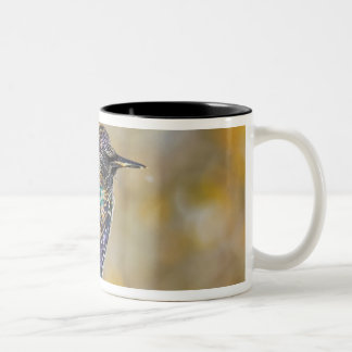 USA, Colorado, Frisco. Close-up of European Mugs
