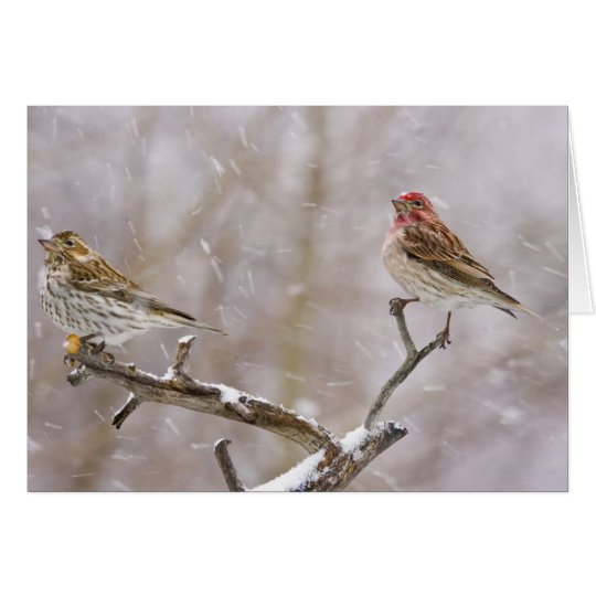 USA, Colorado, Frisco. Female and male Card