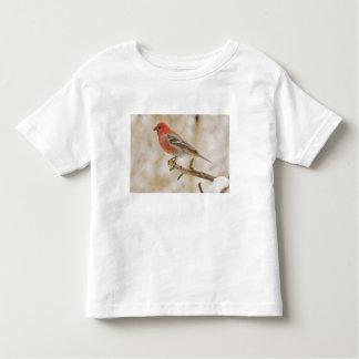 USA, Colorado, Frisco. Male pine grosbeak Toddler T-shirt