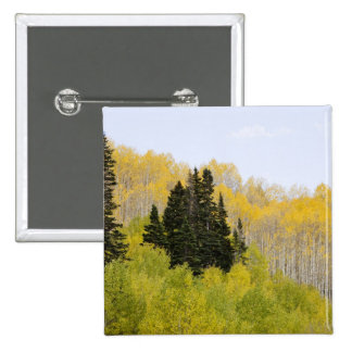 USA, Colorado, Gunnison National Forest, along 2 2 Inch Square Button