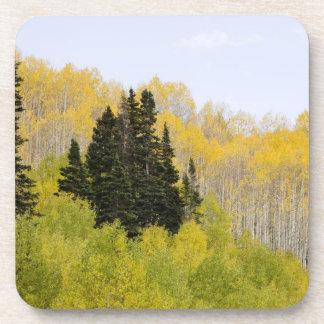 USA, Colorado, Gunnison National Forest, along 2 Drink Coaster