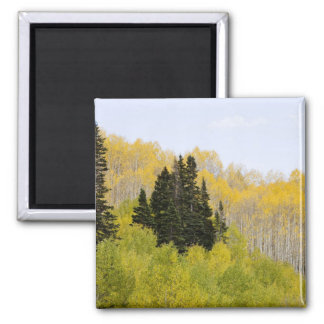 USA, Colorado, Gunnison National Forest, along 2 Magnet