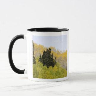 USA, Colorado, Gunnison National Forest, along 2 Mug
