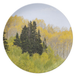 USA, Colorado, Gunnison National Forest, along 2 Party Plates