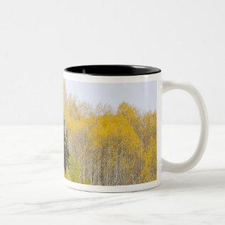 USA, Colorado, Gunnison National Forest, along 2 Two-Tone Coffee Mug