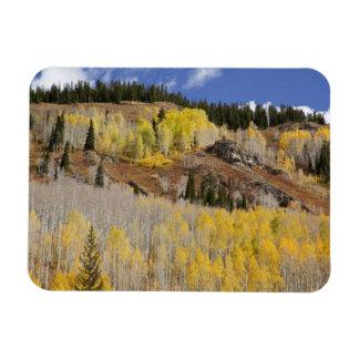 USA, Colorado, Gunnison National Forest, along Magnet