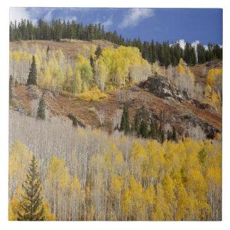 USA, Colorado, Gunnison National Forest, along Tile