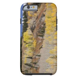 USA, Colorado, Gunnison National Forest, along Tough iPhone 6 Case