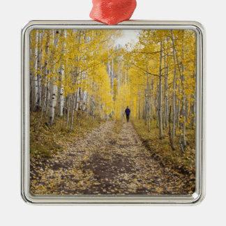 USA, Colorado, Gunnison National Forest near Metal Ornament