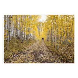 USA, Colorado, Gunnison National Forest near Photographic Print