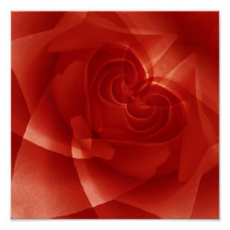 USA, Colorado, Lafayette. Red rose montage Poster