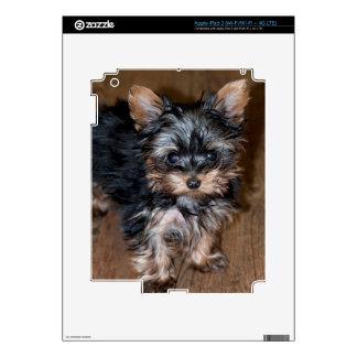 USA, Colorado, Longmont. Mixed breed puppy iPad 3 Decal